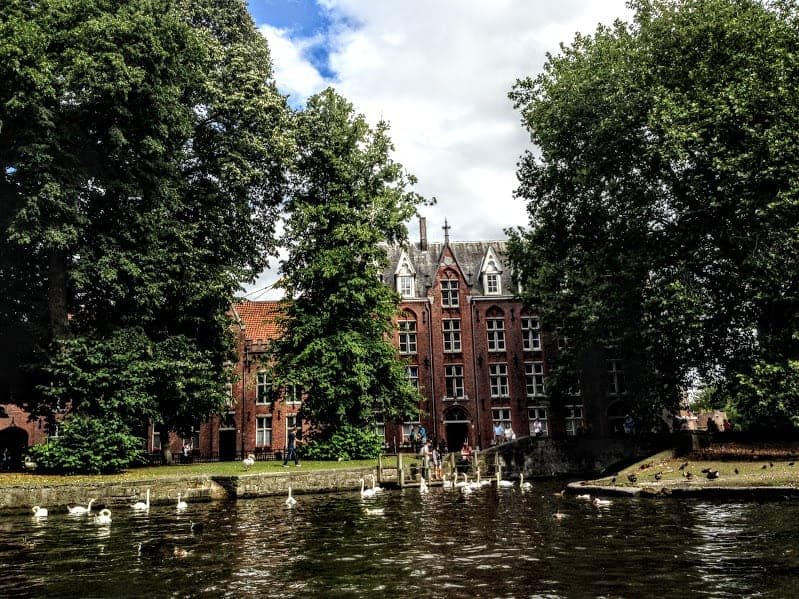 Swans Bruges Legends of Bruges