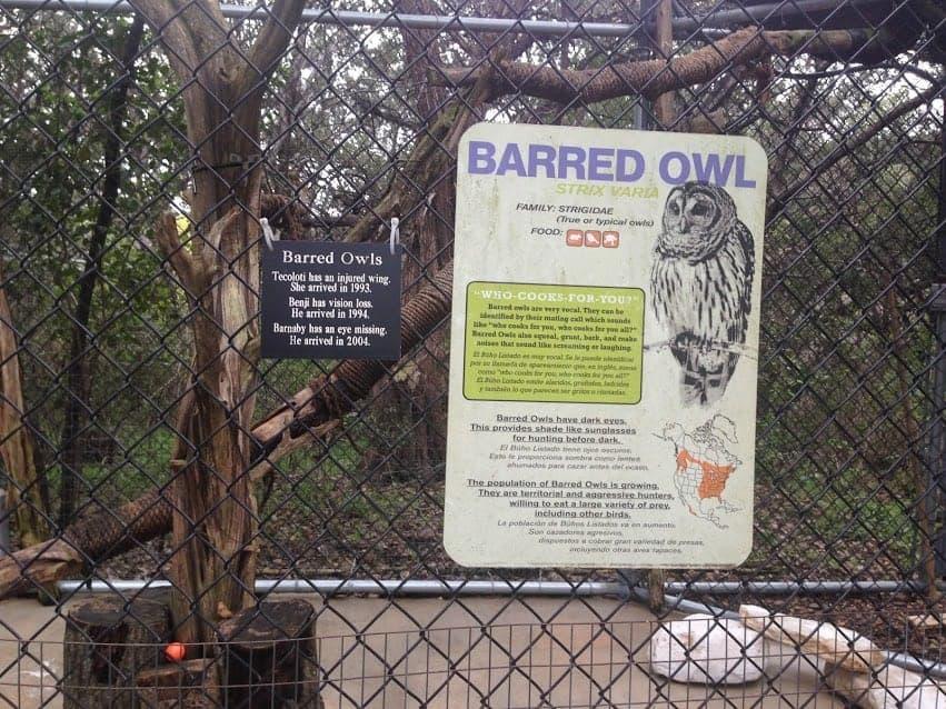 zilker park austin texas owls