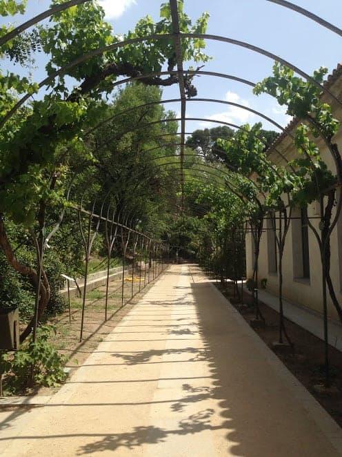 madrid royal botanical gardens