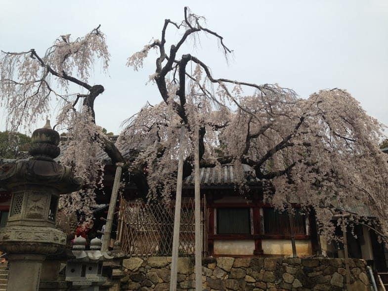 24 hours in Nara himuro shrine