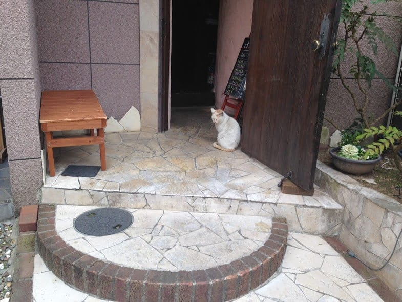 24 hours in Nara cats