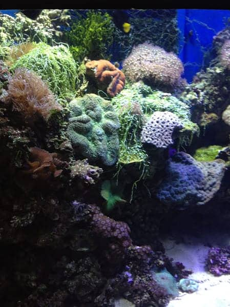 melbourne aquarium sea plants