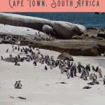 Best Full Day Cape Peninsula Tour