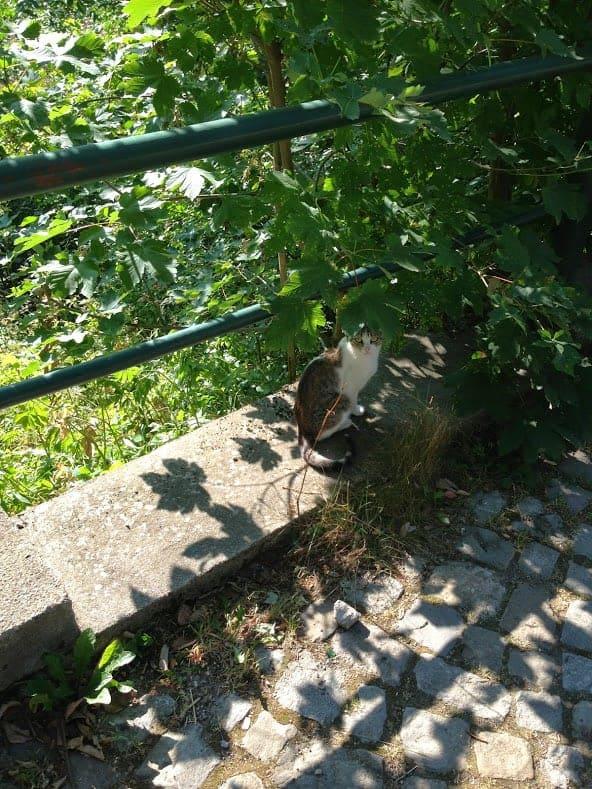 Sinaia Romania Cat