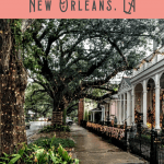Best Things to do in the Garden District
