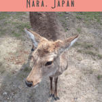24 Hours: Kyoto to Nara Day Trip