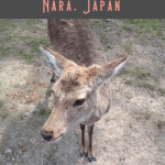24 Hours: Kyoto to Nara Day Trip 2