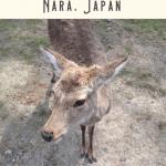 24 Hours: Kyoto to Nara Day Trip 3