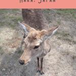 24 Hours: Kyoto to Nara Day Trip 4