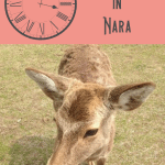 24 Hours: Kyoto to Nara Day Trip 5