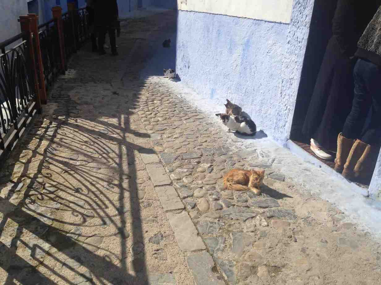 24 hours in Chefchaouen