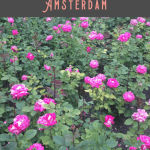 One Day in Amsterdam Itinerary 2