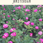 One Day in Amsterdam Itinerary 3