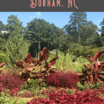 24 Hours: Unique Things to Do in Durham NC 2