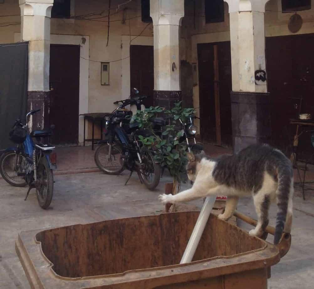 24 hours in Marrakech
