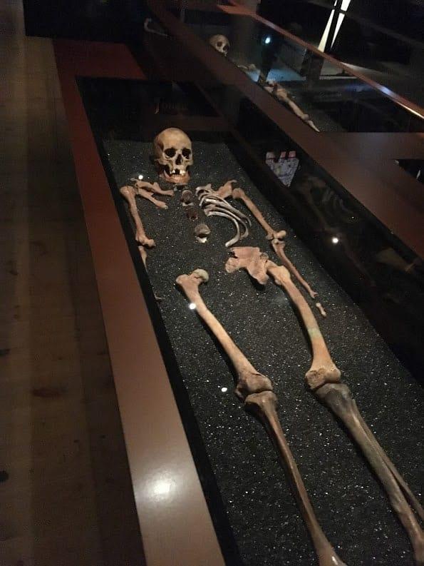 Skeleton Vasa Museum