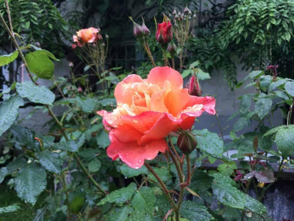 baroniet rosendal gardens