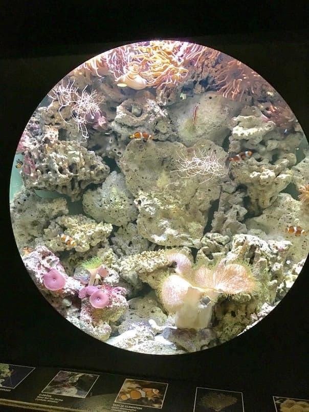 clownfish universeum