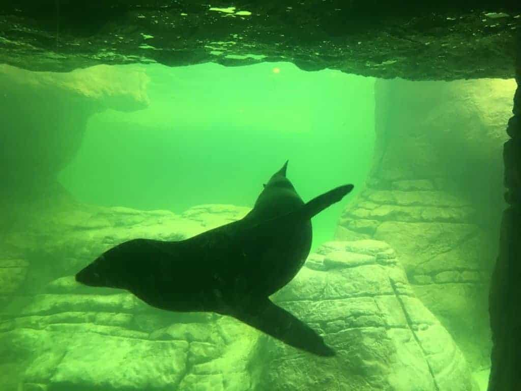 walrus and sea lion conservation