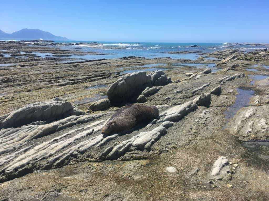 24 hours in kaikoura seal colony