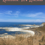 24 Hours: Best Things to do in Kaikoura 2