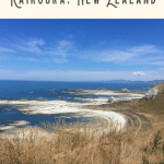 24 Hours: Best Things to do in Kaikoura 3