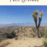 A Perfect One Day in Palm Springs Itinerary 3
