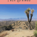 A Perfect One Day in Palm Springs Itinerary 4
