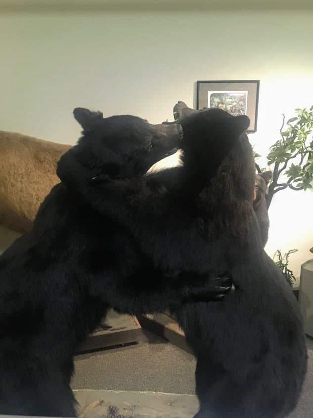 casino bears