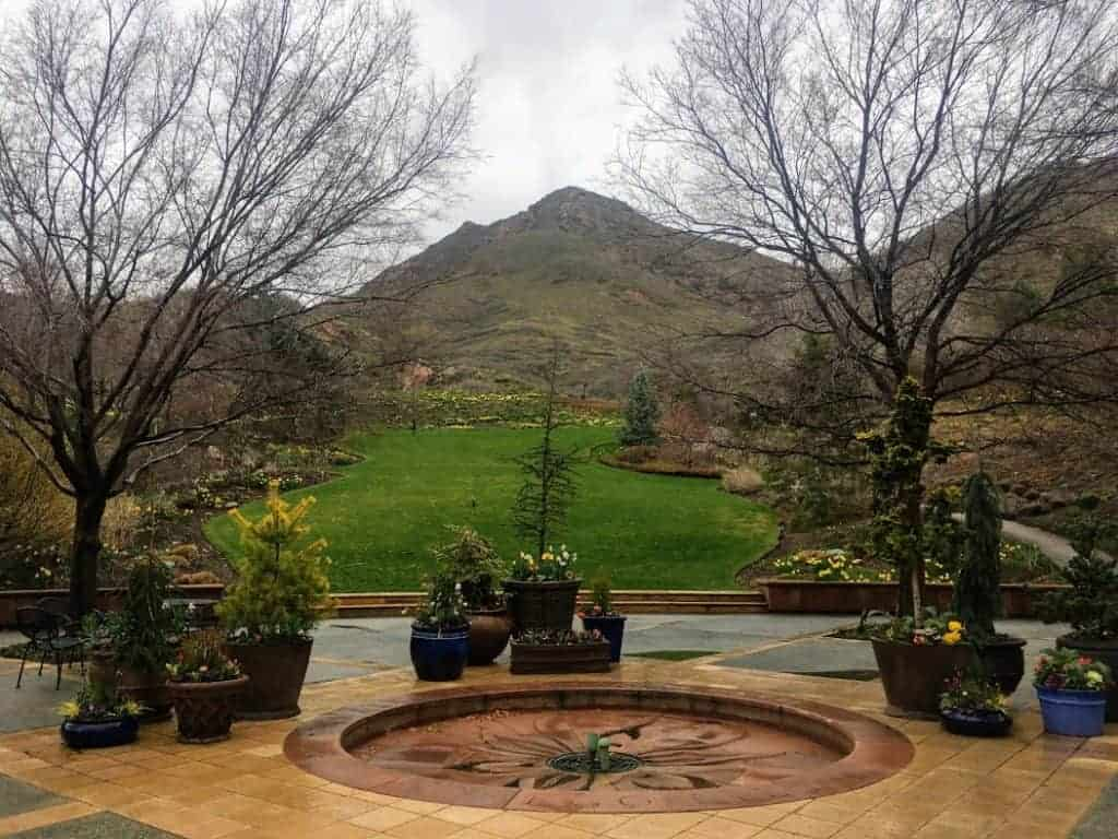 24 Hours in Salt Lake City daffodils