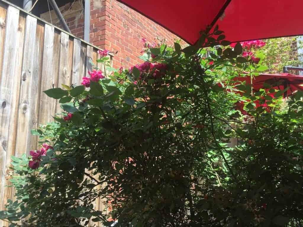 ethiopian cafe garden