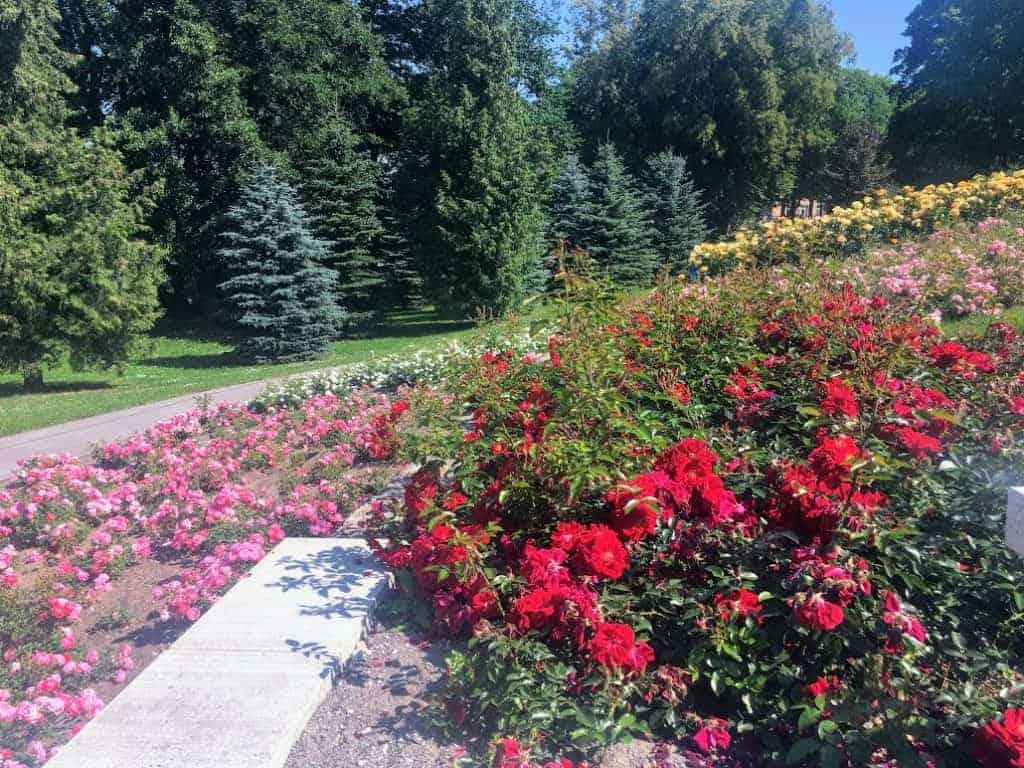 kadriorg park roses