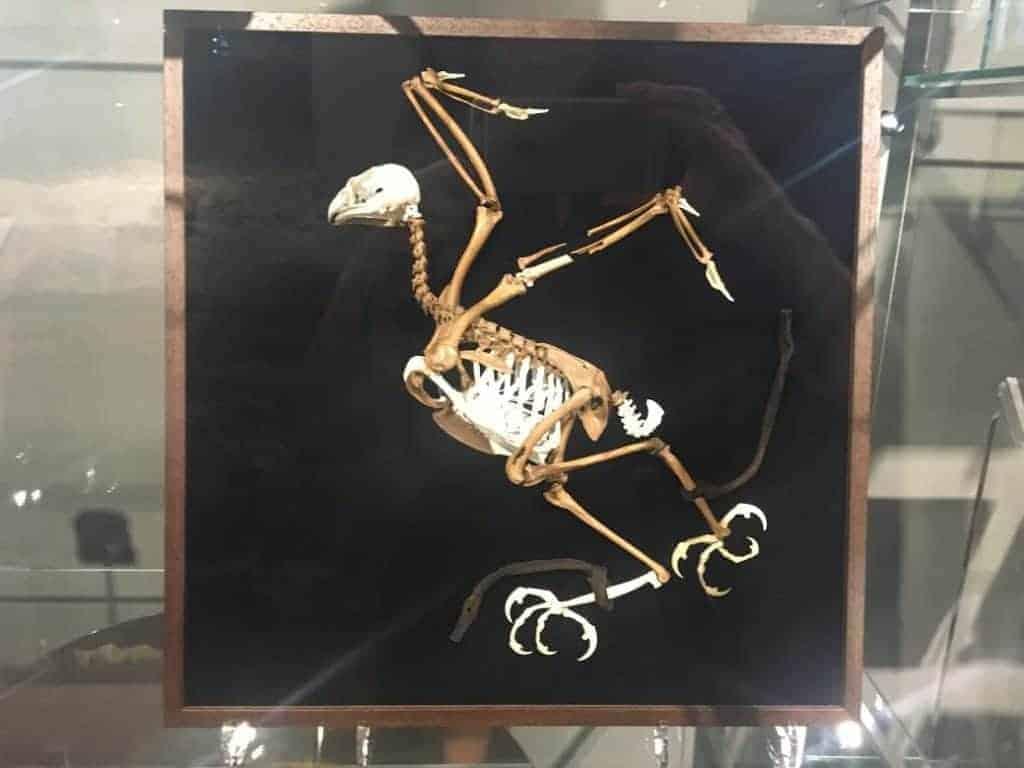 dinosaur bird vilnius