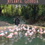 A Perfect Atlanta Walking Tour 3