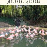 A Perfect Atlanta Walking Tour 4