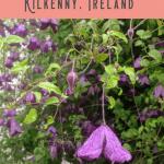 Best Kilkenny Accommodation 3