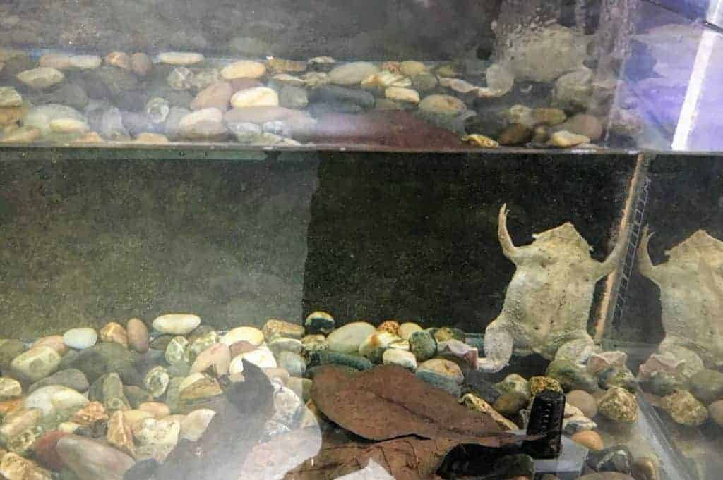 frog lake champlain