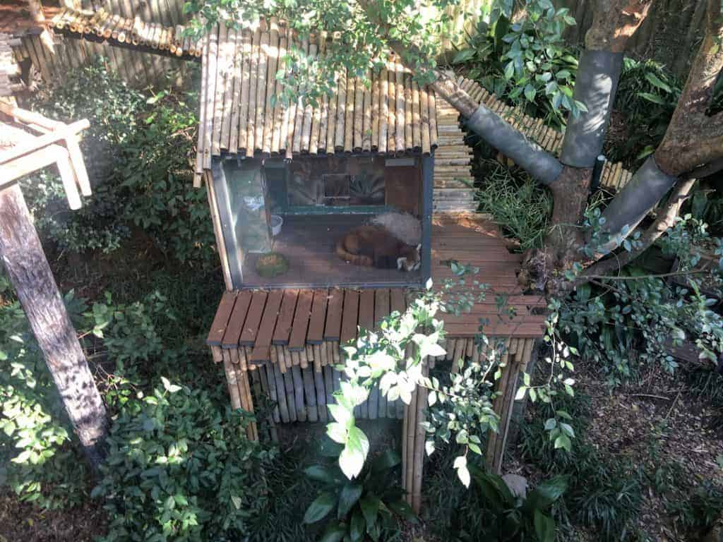 red panda zoo atlanta