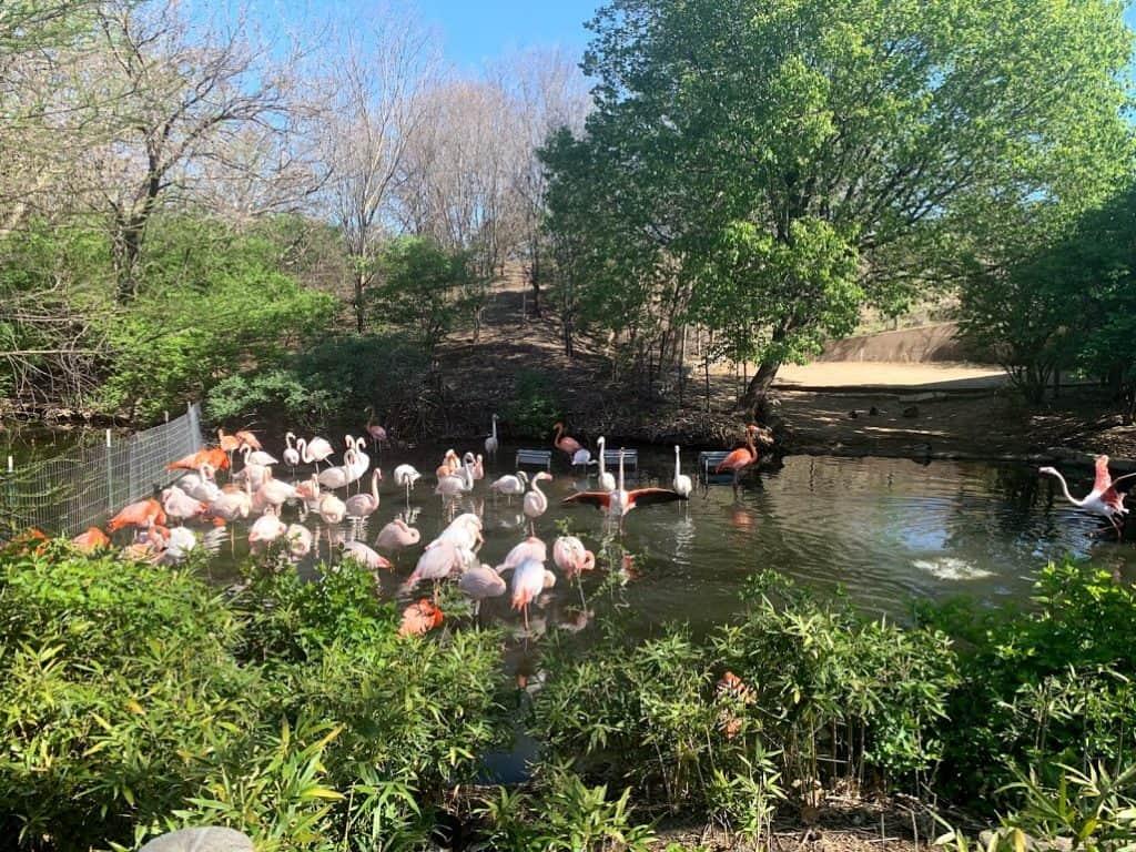 sedgwick county zoo things to do wichita