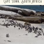 Best Full Day Cape Peninsula Tour 3