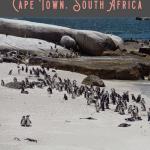 Best Full Day Cape Peninsula Tour 2