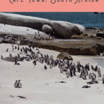 Best Full Day Cape Peninsula Tour 4