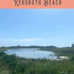 Best Rehoboth Beach Attractions: A Perfect 24 Hours 1