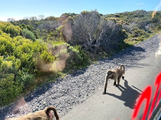 Best Full Day Cape Peninsula Tour 5