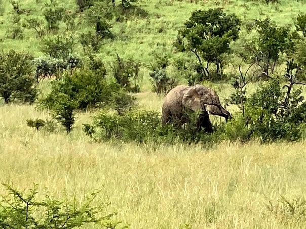 one day safari from johannesburg