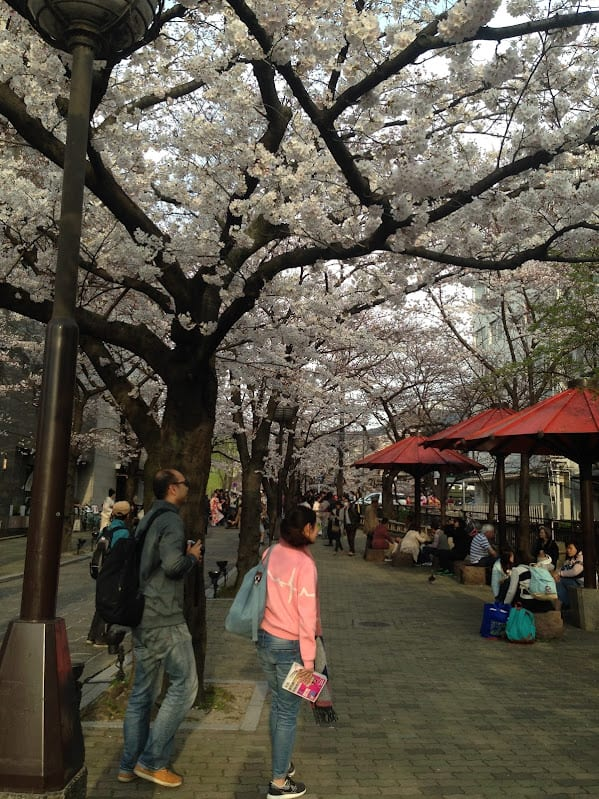 24 hours in kyoto